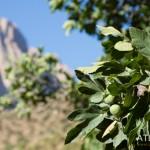 AtlasPhotos_Voyage-15